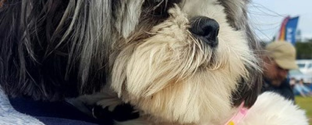 Join Bark for Life at farm festival